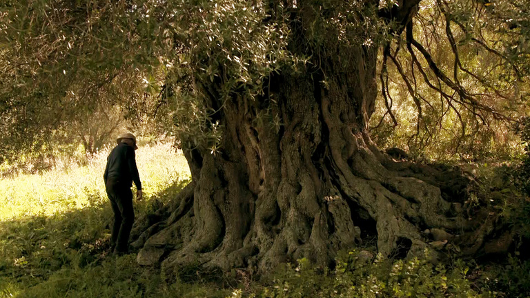 La peau de l'olivier (4).jpg